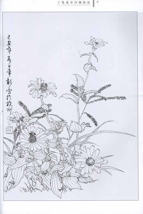 工笔花卉白描技法