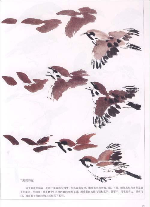 翅色斑斓——中国画五十一种鸟的画法(上)