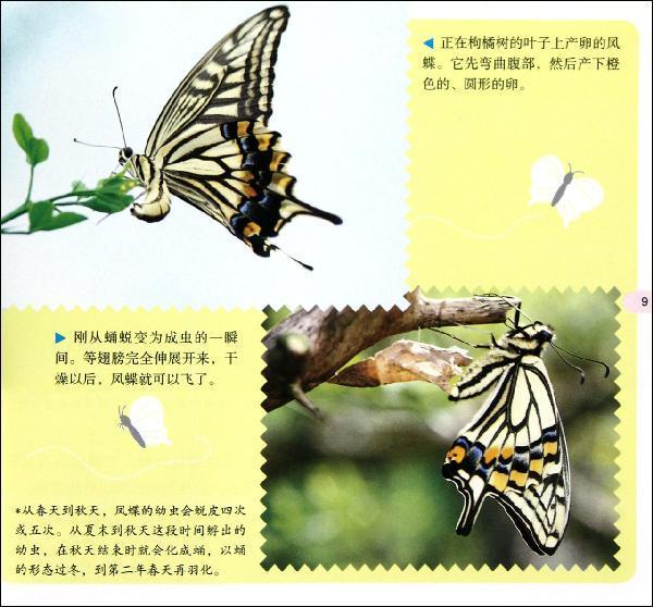 蝴蝶蝗虫步骤画法