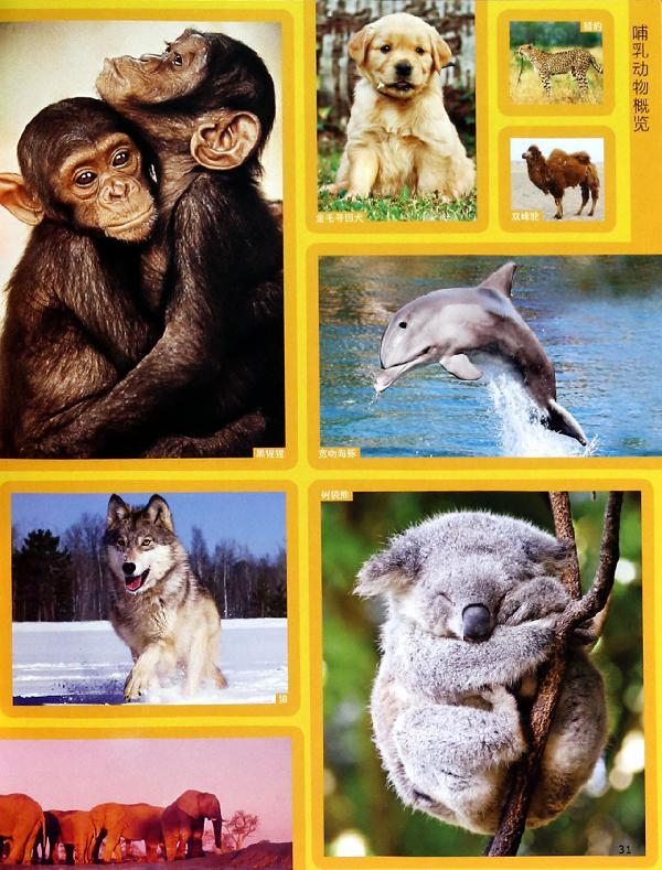 美国国家地理终极动物百科-(美)露西.斯佩尔曼-少儿