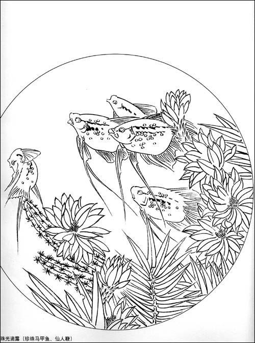 日本鲤鱼风筝线描画