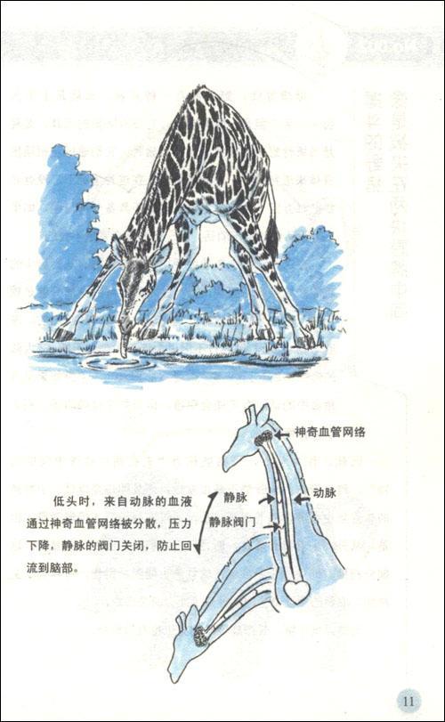 超级有趣的动物记-实吉达郎-科普读物-文轩网