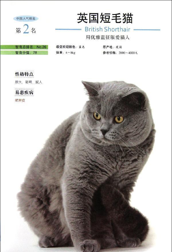 壁纸 动物 猫 猫咪 小猫 桌面 600_878 竖版 竖屏 手机
