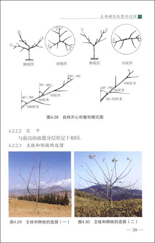 2放任树修剪 6-3早实类树的修剪  精彩内容 &nbsp