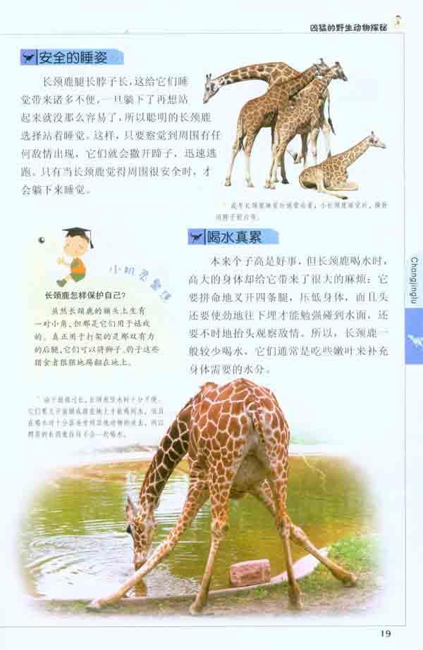 最高的动物——长颈鹿